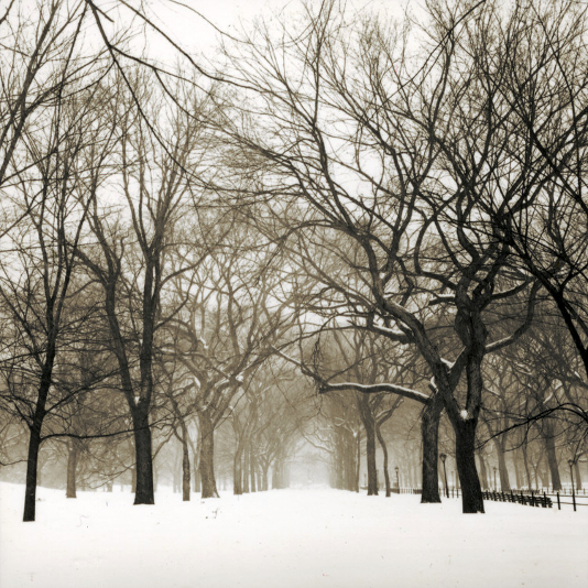 Shakespeare Walk, Central Park ,  1996  from the  Landscape  series. Toned silver gelatin print. Limited Edition 2/5