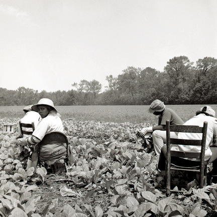 Working Tobacco , from the  Southland  series.  Archival Pigment Print.  Limited Edition 2/10