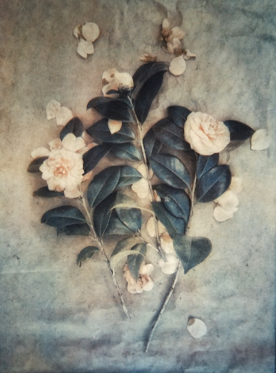 Camellias , from  The Old Garden  Series. 2018  Tri-color gum bichromate over cyanotype.  Limited Edition