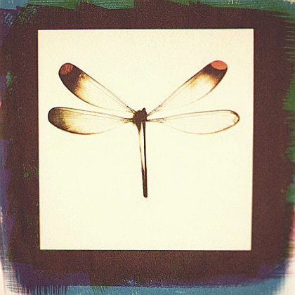Damselfly II,  from  Kept Secrets  series.  Tri-color gum bichromate print.  Limited Edition
