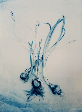 Narcissus Bulbs  2018 (black pigment over cyanotype base)