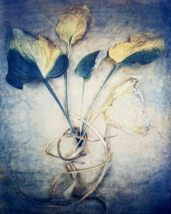 Hosta Leaves  2018, from  The Old Garden  series.  Tri-color gum bichromate over cyanotype.  Limited Edition of 10