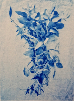 Bound Eucalyptus , from  The Old Garden  series.  Limited Edition.  Gum bichromate over cyanotype