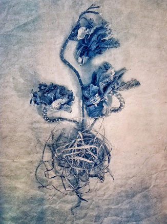 Ornamental Kale  2019, from  The Old Garden  series. Tricolor gum bichromate over cyanotype.  Limited Edition of 5