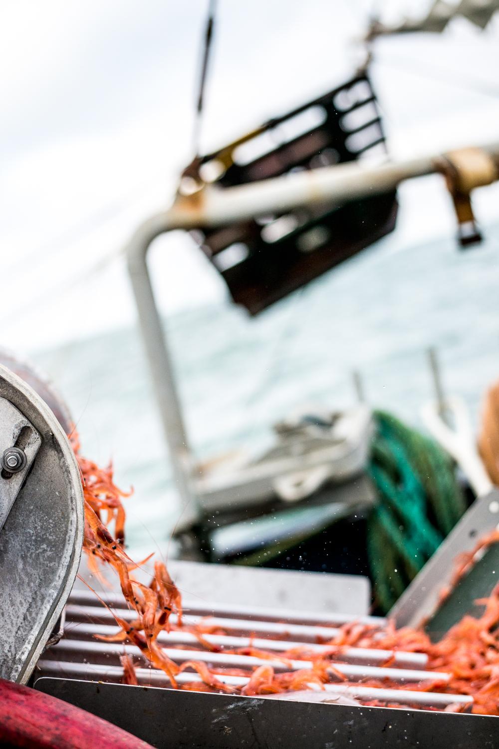 PNWfishing-18.jpg