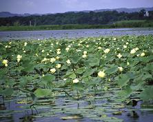 Upper Mississippi NWR