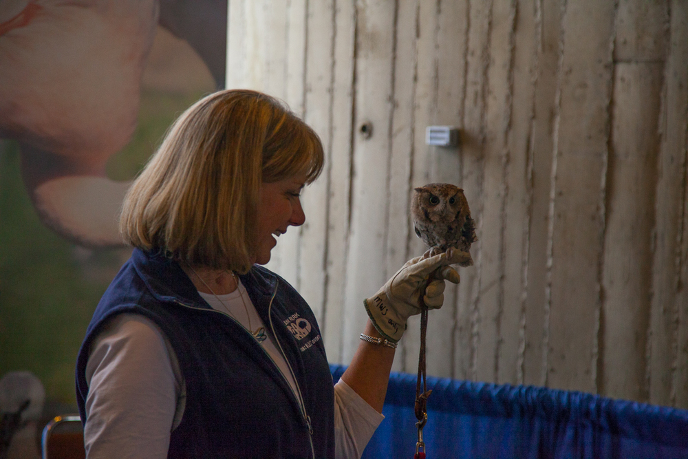 Kathy McKee and friend, Eastern screech owl Pigwidgeon, from the Blank Park Zoo