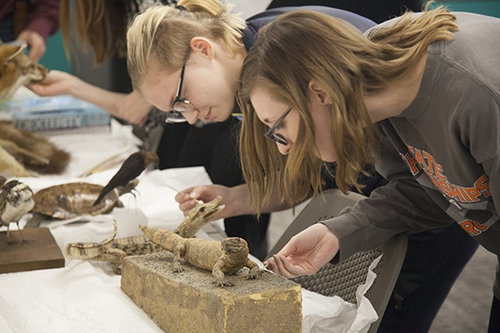 Workshop: Care and Management of Natural History Collections