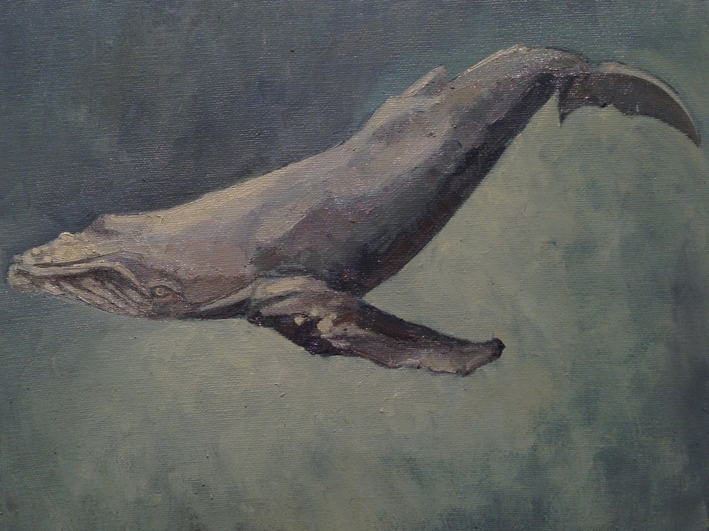 Edwina Lucas,  Humpback Whale in Gray