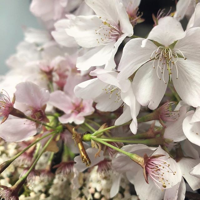 Playing with perfect spring blossoms on today's photo shoot. I am so excited to see everything coming to life again. If I had to describe Spring in two words it would be REFRESHING & HOPEFUL.  So many good things to come and I am so grateful. Starting with the 25 beautiful brides that I get to work with this year. 🌸👰🏻🌸 #2018🎉 #bridalartist #florist #southernoregon #plumblossoms #foragingflorist #springblossoms