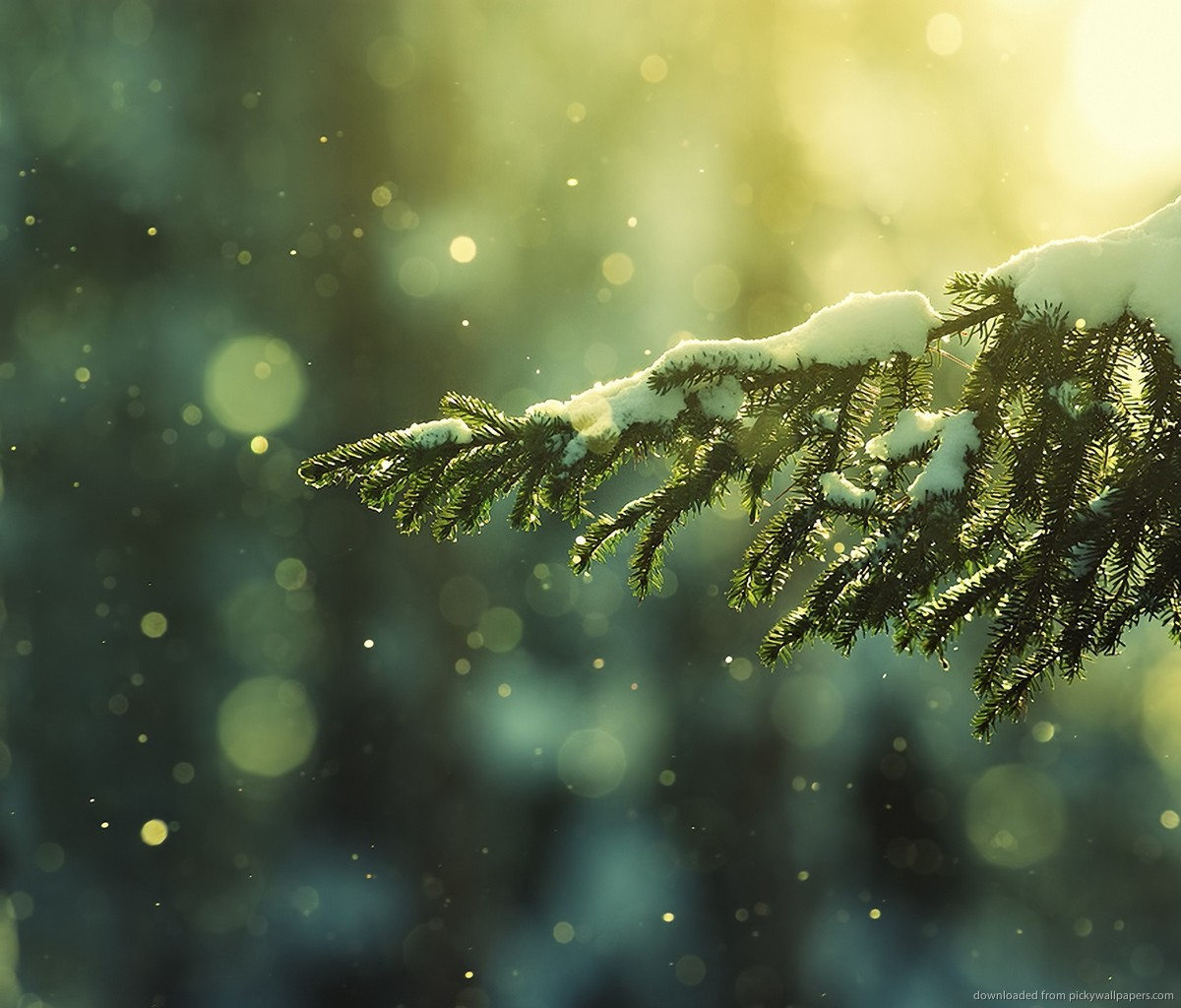 awesome-snowy-tree-branch