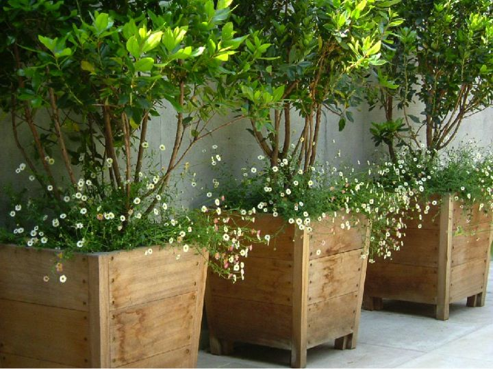 Amazing Tall Pots For Outdoor Plants Part - 11: Potted Plants