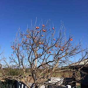 Los Olivos, USA