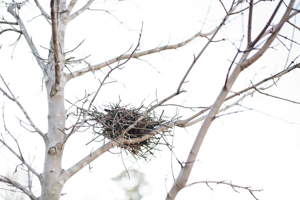 Bird's nest1.jpg
