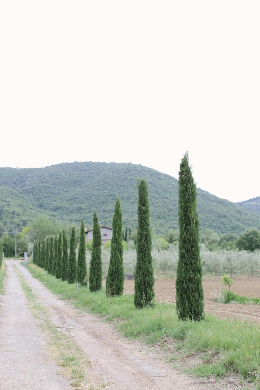 Italy Tuscany1_16.jpg