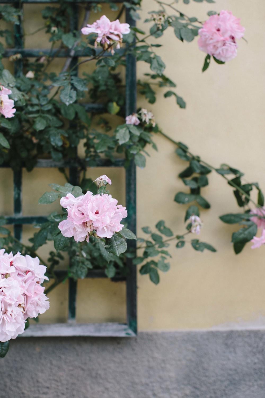 Italy Tuscany1_40.jpg