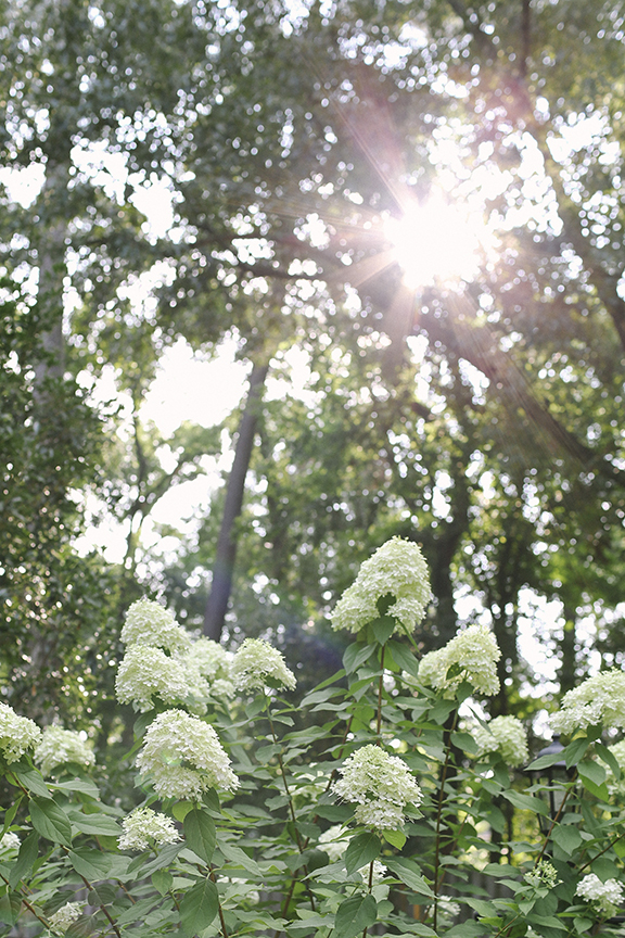 Hydrangeas and sun | Lauren Carnes Photography.jpg