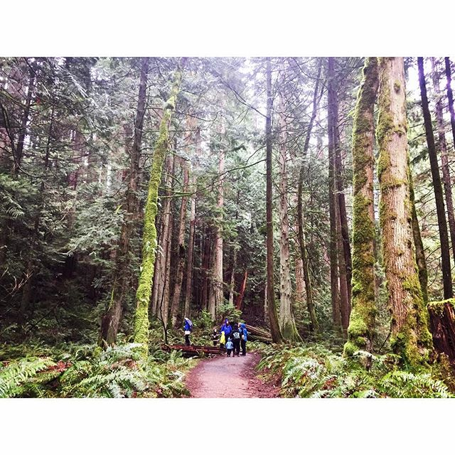 I love this magical place. ❤️ Today we found a very poisonous rough-skinned newt and a northwest salamander. We shared snacks of apples and popcorn. Leo showed me a yew tree. He said the branches are good for making bows, because they bend and flex without breaking. Then the rain came slamming down and we scurried away like woodland gnomes. #pnw #pnwspring #nature #naturewalk #woods #forest