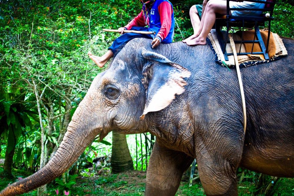 elephants-7.jpg