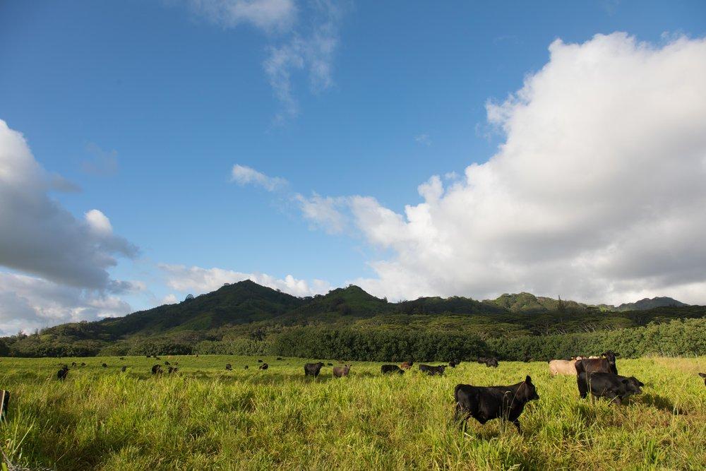 Kauai-8743.jpg
