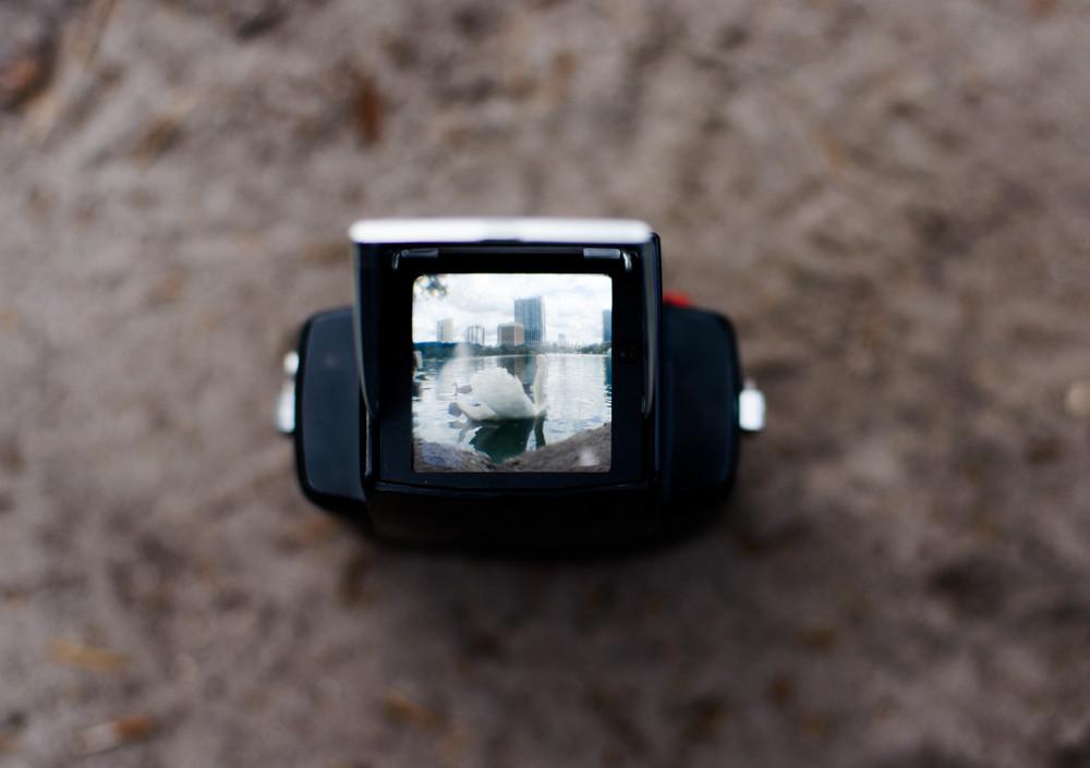 A swan seen through a Starflex Brownie camera.