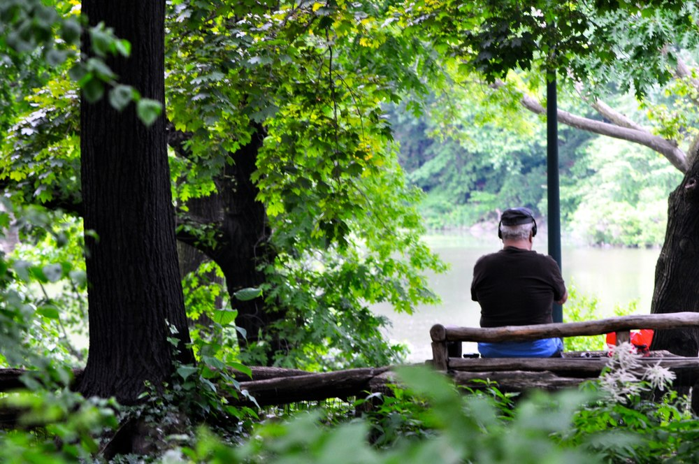 Nature is like music. Strums the soul. Central Park. New York City.