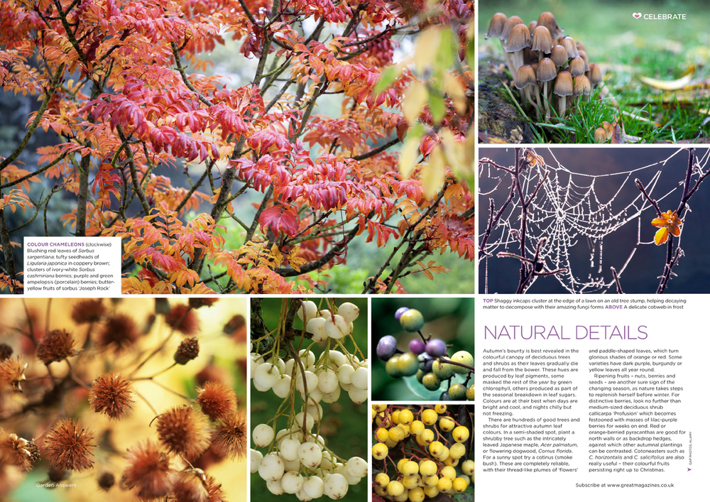 Garden Answers magazine // Bauer Media