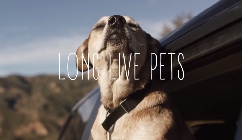 Long LiVE PETS - A social film about the day in the life of a rescue dog