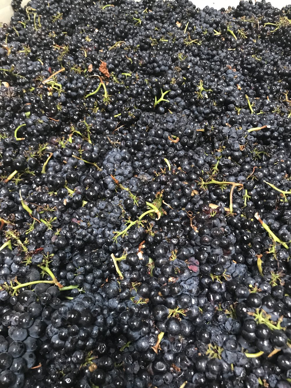 Whole Cluster Syrah in cold soak.