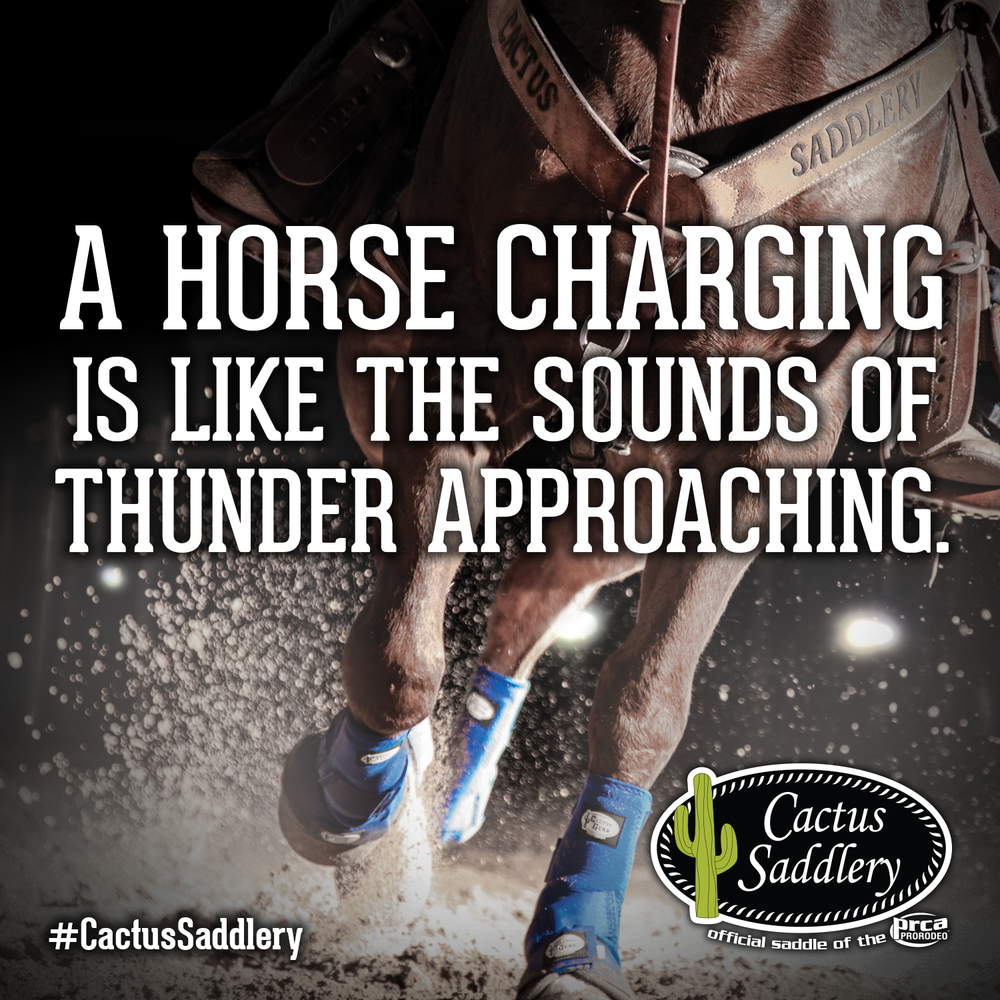 Cactus-Saddlery-FB-Thunder1.jpg