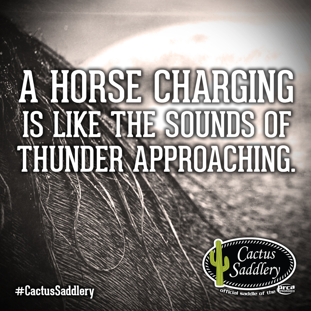 Cactus-Saddlery-FB-Thunder.jpg