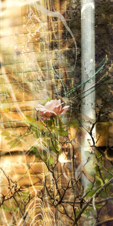 December Bloom