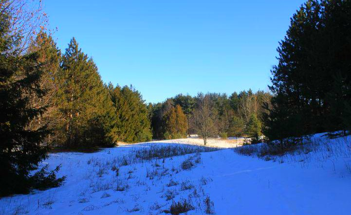 A portion of our back yard, we have 49 acres mostly forest with many walking trails.