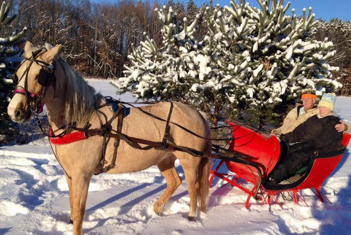 In a One Horse Open Sleigh