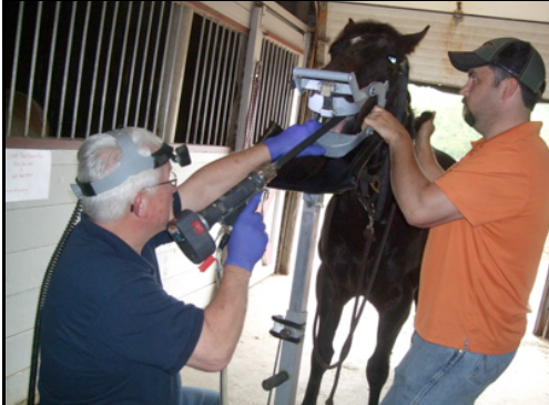 Equine dentistry demo at May club meeting at Rustic View Farm