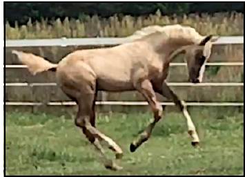 "SDH Vision in Gold ""Baby Doll"" romps at 3 months after a close call in the first few days after birth."