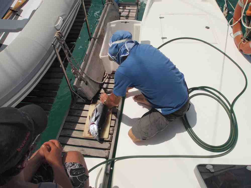 Preparing_tuna_on_deck