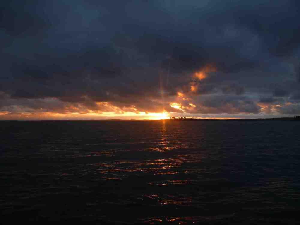 Treed_sunset