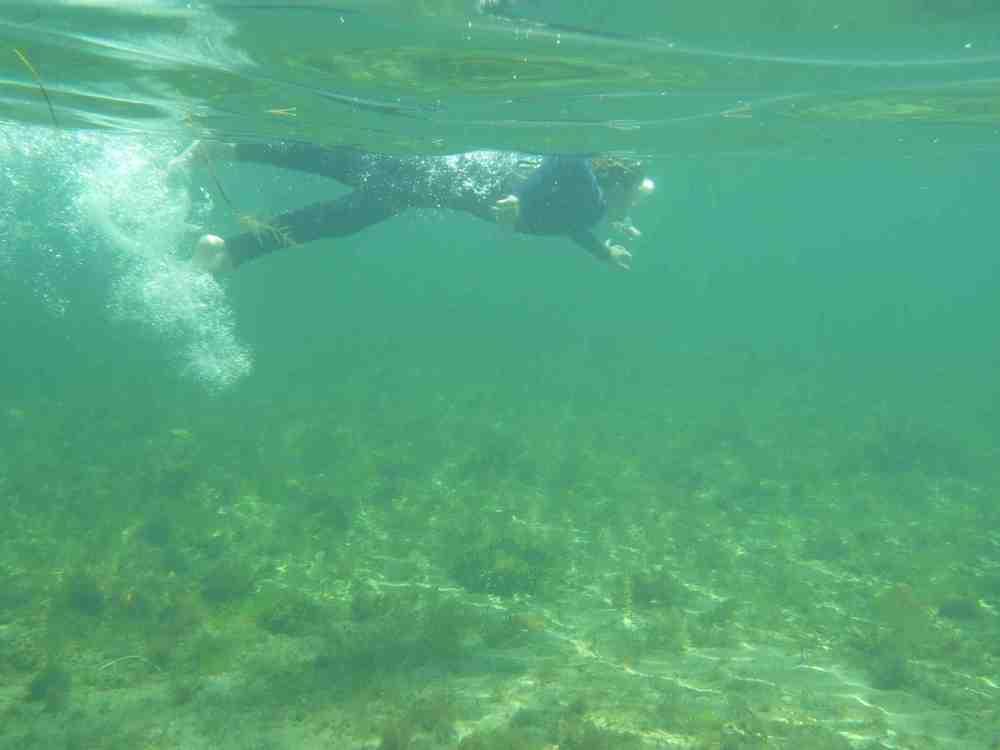 Swim_snorkel
