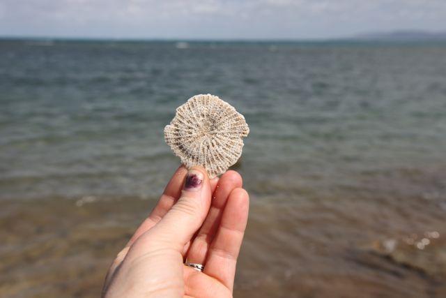 Mushroom_coral