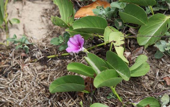 16_purple_flower