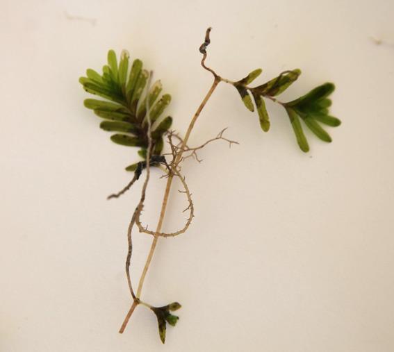 21pretty_seagrass