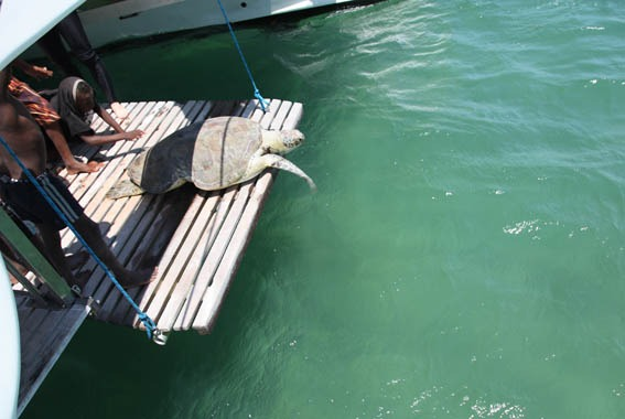 25turtle_release