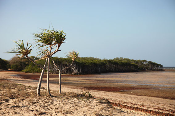 31_view_to_mangroves