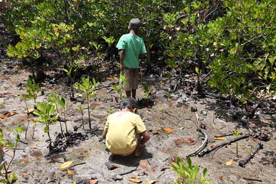9_in_the_mangroves