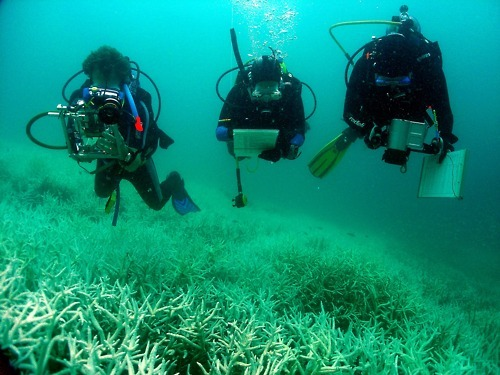 #photooftheday Scientists and trainees during the coral bleaching project diving over bleached coral 2006 Photo: Sandy Scheltema #Greatbarrierreef