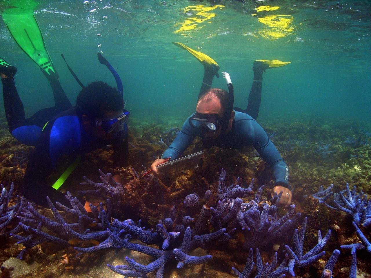 Indigenous trainee Lwayne Boslem with Paul Marshall, scientist from GBRMPA http://ow.ly/6fo1v collecting data on healthy corals. Photo: Sandy Scheltema #coralbleachingproject #greatbarrierreef #photooftheday