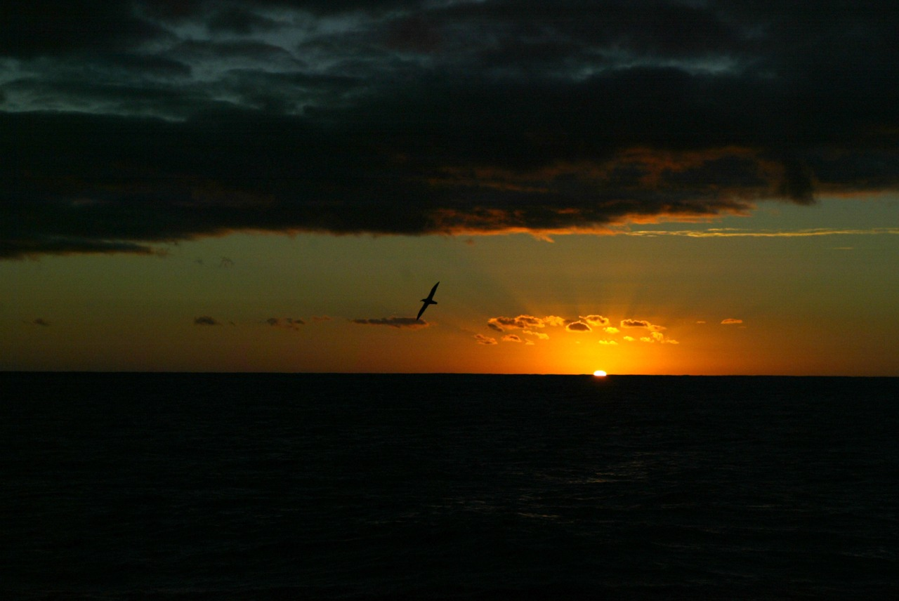 Sunset with albatross. Taken off Portland coast during Blue Whale research. #photooftheday Photo: Sandy Scheltema