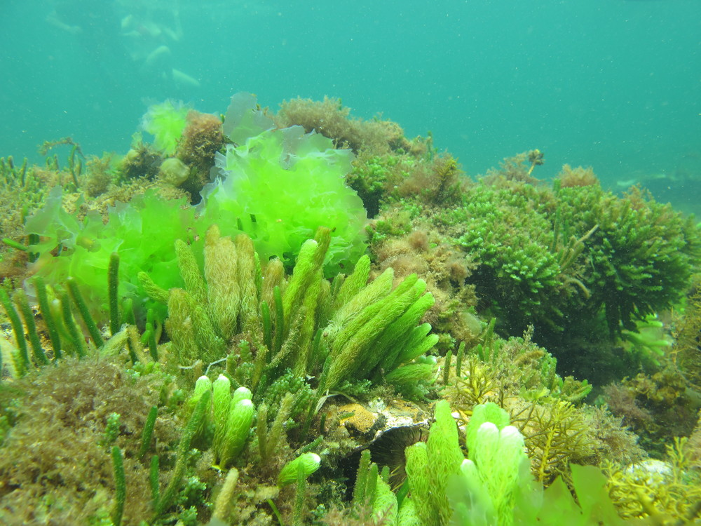 Underwater garden- Ricketts Point Marine Sanctuary with Two Bays immersive learners Photo: Michelle Quach