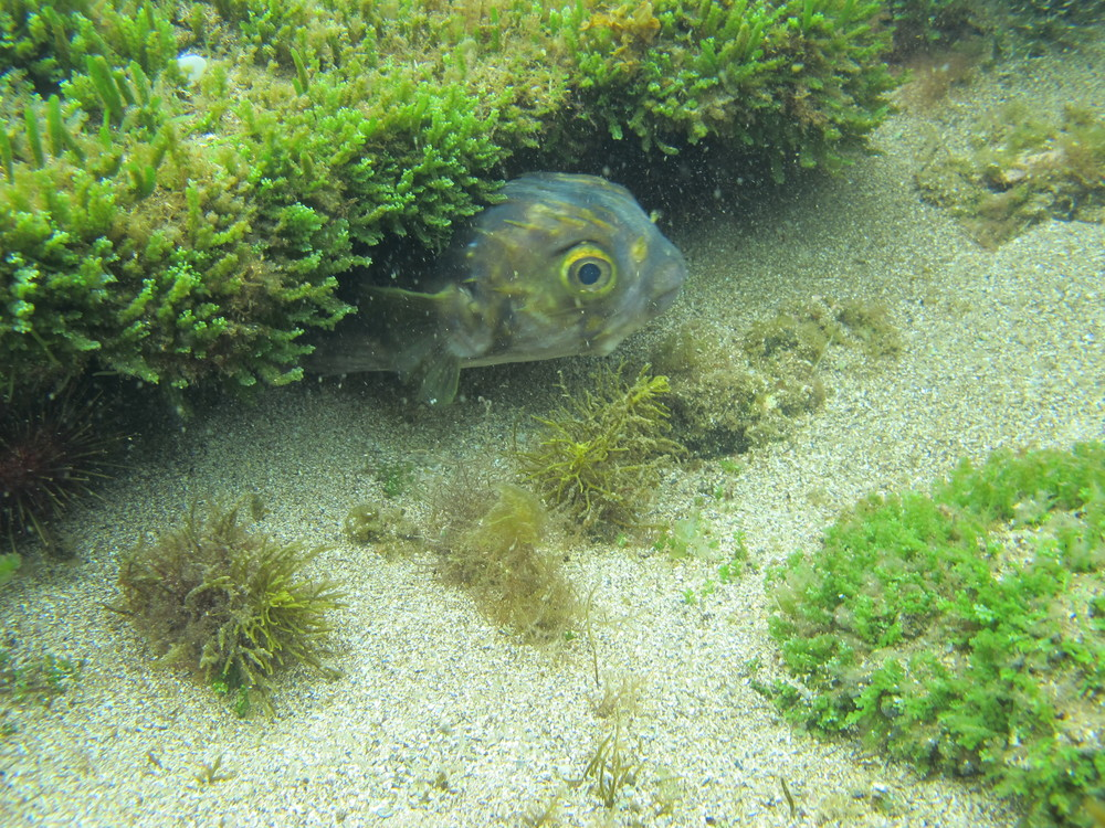 And you never quite know who you will meet down there... A Globe Fish Photo: Michelle Quach